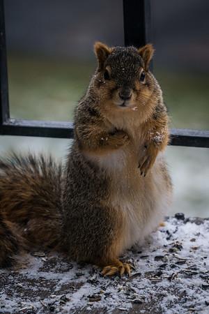 2017-01-06 - Squirrel