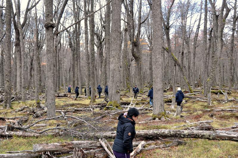 2012 Karukinka group at natural growth.jpg