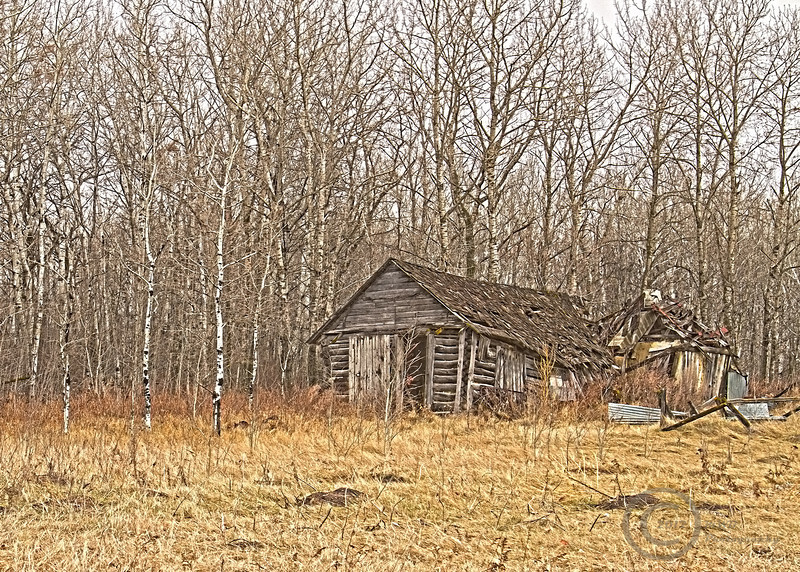 Shed in the Woods.jpg