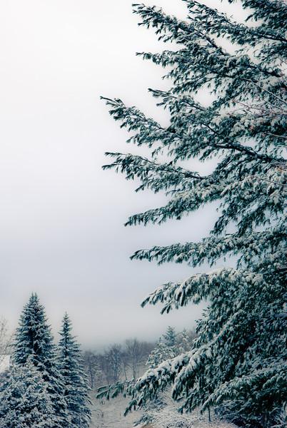 Winter Wonderland in Vermont-3.jpg