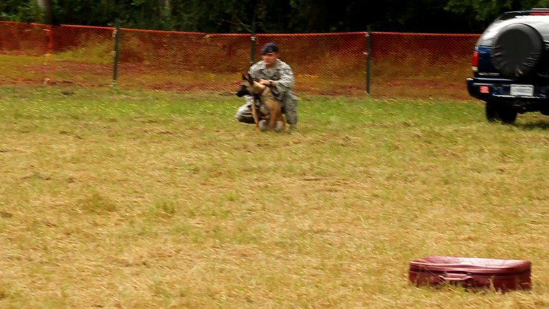 Video Bonus - Security Forces Langley Air Force Base Police Military working dog Demo.