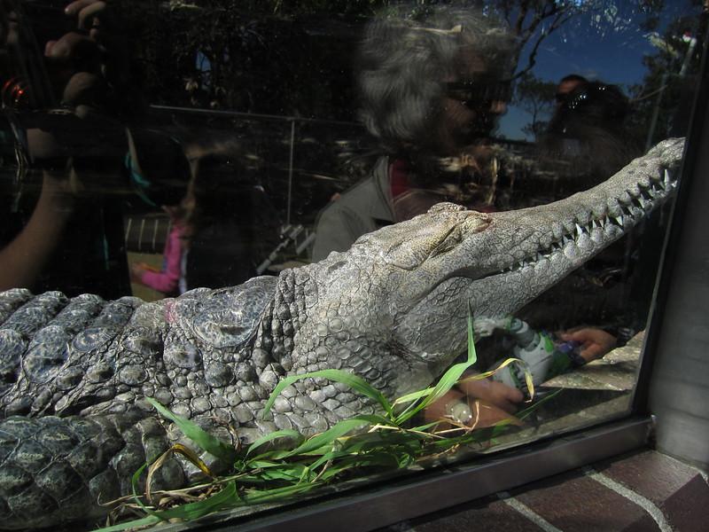 Sydney - Sydeny Zoo-18.JPG