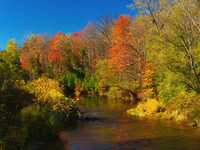 Whitemans Creek.jpg