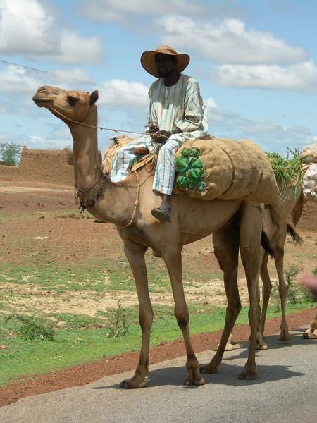 camel-434271701-O.jpg