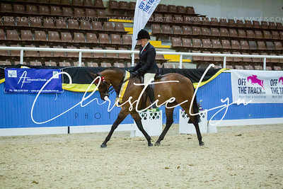 Class 32: Owner/Rider Show Galloway over 14 hh up to inc 15 hh