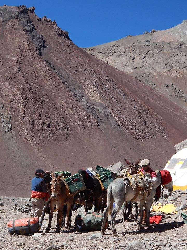 Mules dropping off loads at Base Camp