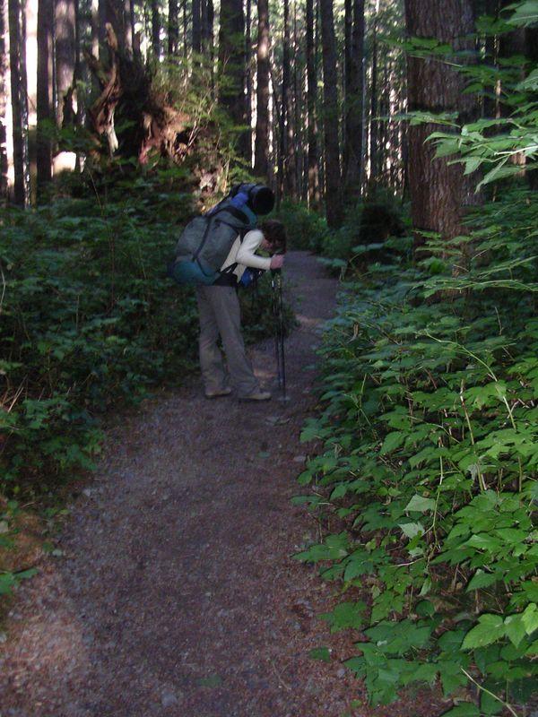 Such a pretty trail through the woods.