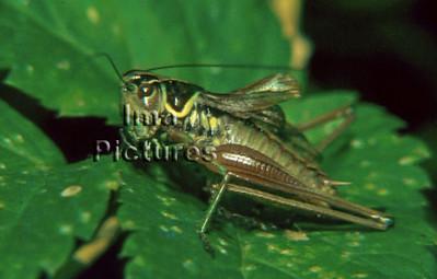 Arthropoda Arthropod geleedpotigen Arthropode