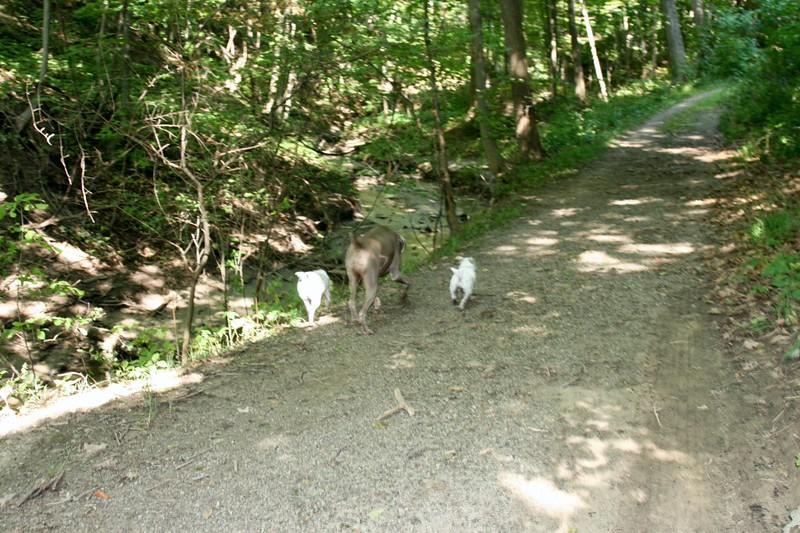 farley pups 194-2.jpg