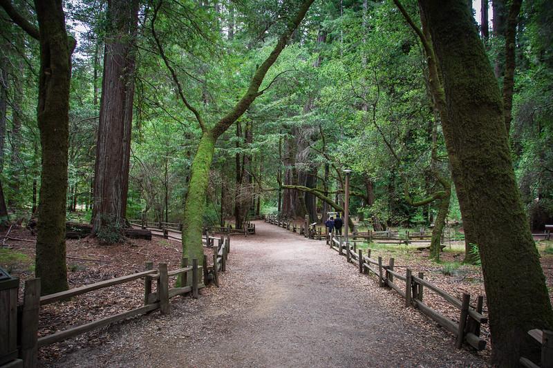 Redwood-67.jpg