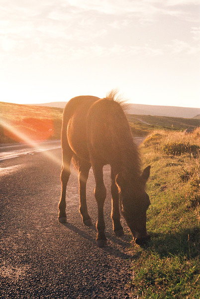 Horse on Dartmoor