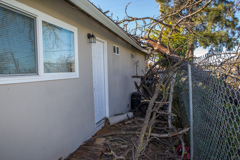 5671 Wallace Ave - Tree 1030am 12 16 2017 Extremly Windy Conditions-57.jpg