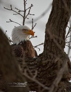 My Eagles