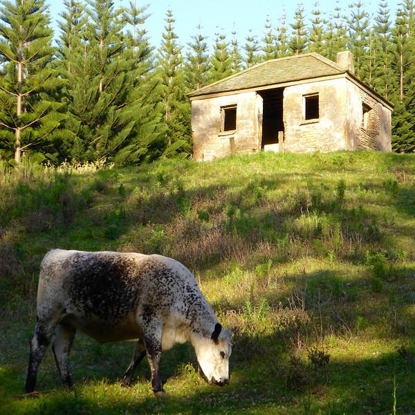 Freemans Hut.jpg