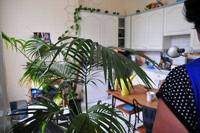 Tree Moving Jun09