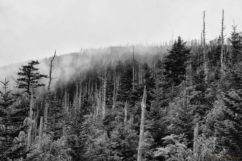 Peak Trees