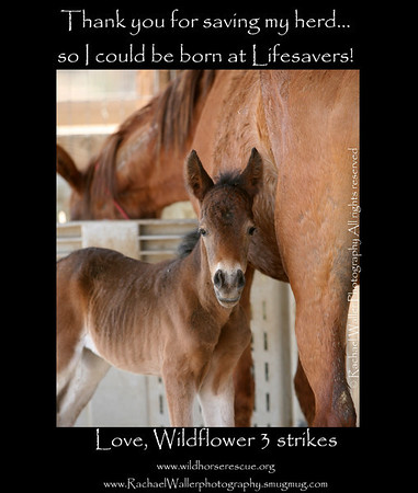 Lifesavers Saving The 3 strikes DAY 6- MEET WILDFLOWER!