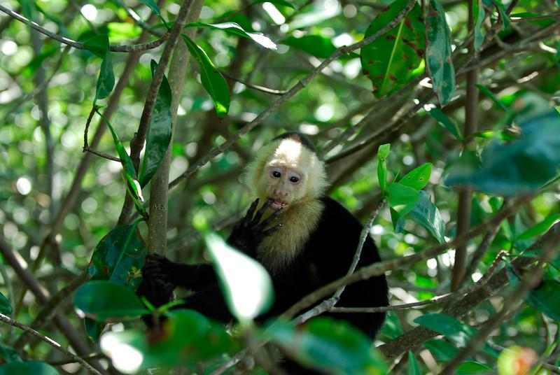 080119 9541 Costa Rica - Manuel Antonio - Mangroves Boat Tour _E _L _G ~E ~L.JPG