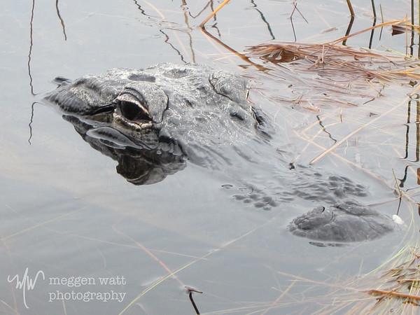 Wildlife Florida