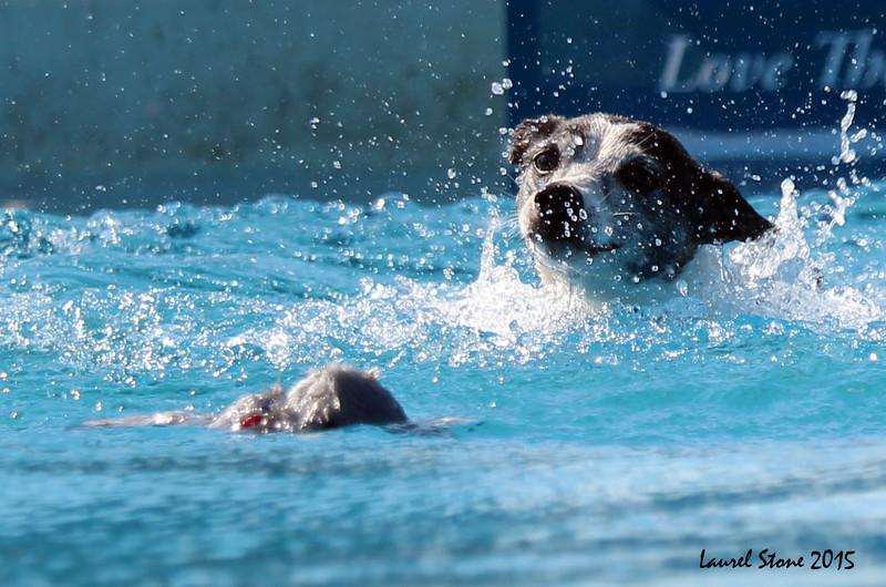 2015.8.5 Winnebago County Fair Dock Dogs (26).JPG
