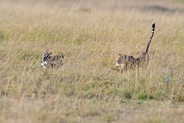 מסאי מרא - קניה - Masai Mara - Kenia