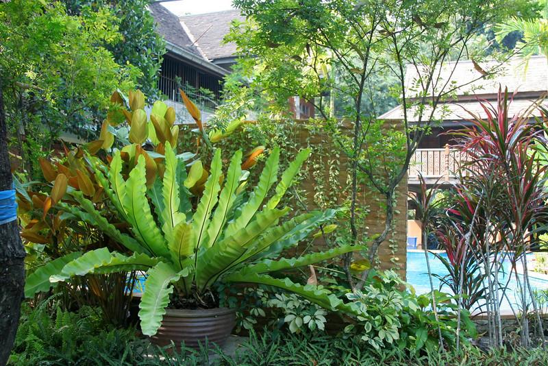 Chiang Mai Thailand 2008 53.jpg