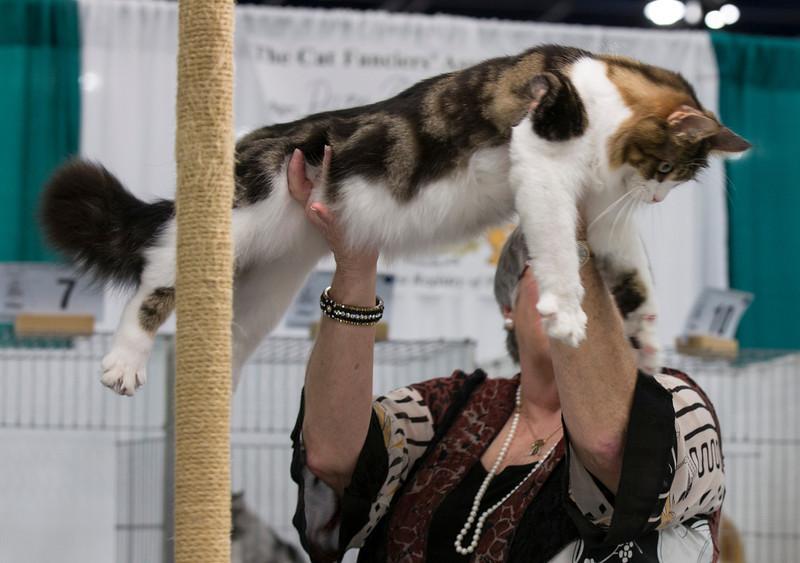 CatShow2014197.jpg