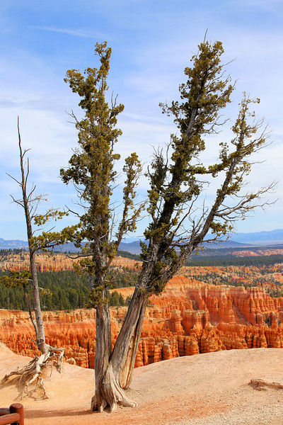 Bryce Canyon Trees 4.2017.jpg