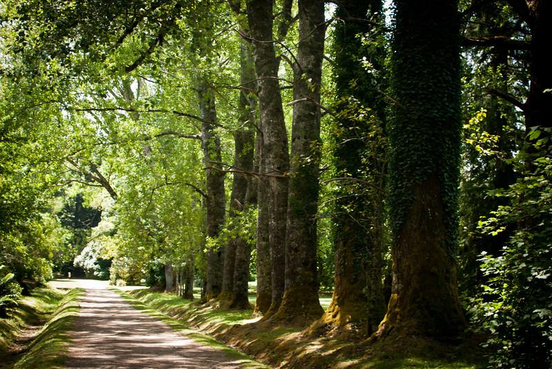 Valdivia 201201 Jardin Botanico (3).jpg