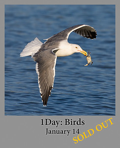 01-14-2017 1 Day Birds