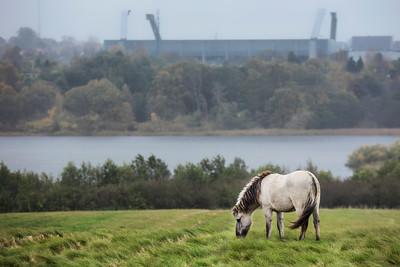Vilde Heste Nørrestrand