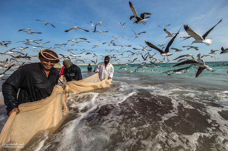 Sardine Season (58)- Dhofar.jpg