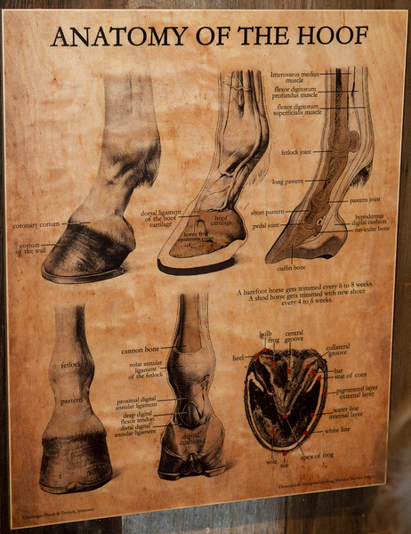 Information about horses' feet