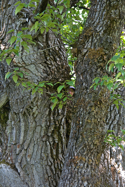 Cat in a tree