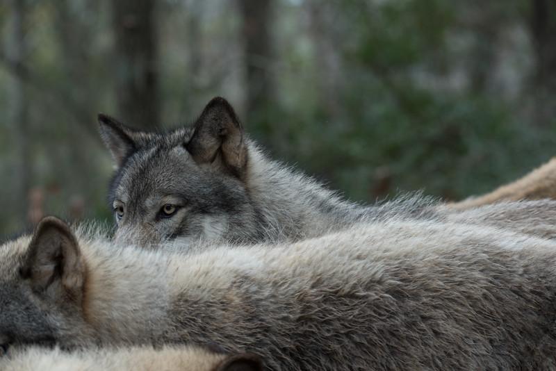 Seacrest Wolves_-72.jpg