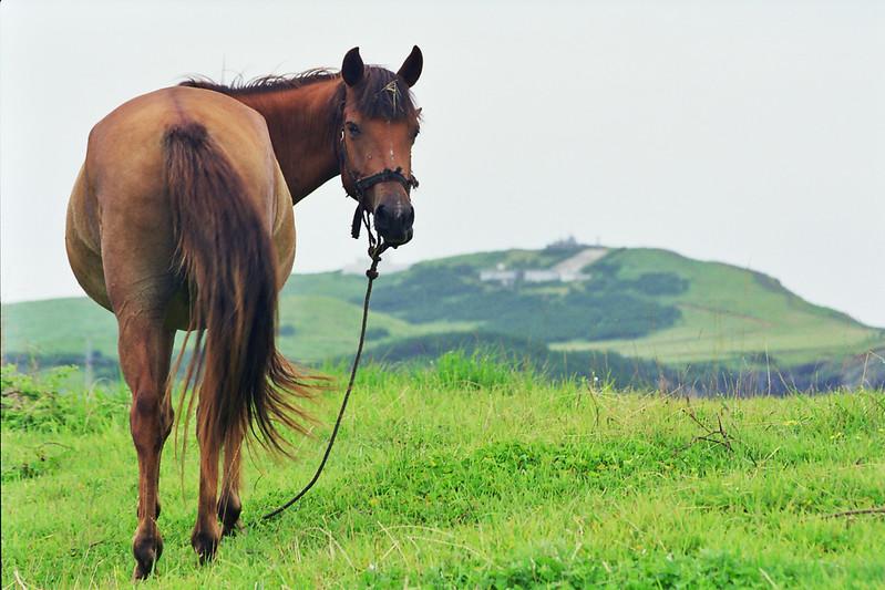 2000 Udo Island, Korea horse.jpg