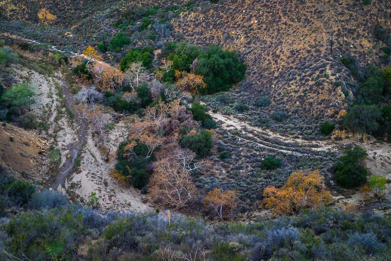 Castaic_Creek_Fall_Color_Southern_California_DSC3445.jpg