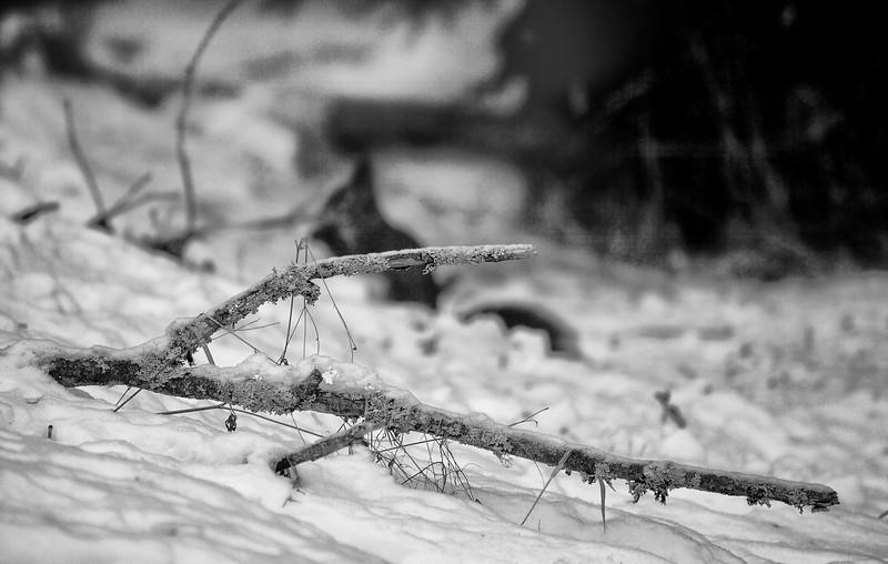 Dag_313_2013-feb-18_7608sv.jpg