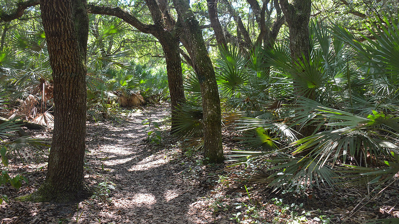 Oak hammock shading trail