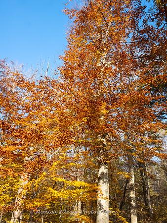 Fall 2018 Around Catoctin Mountain Park Maryland