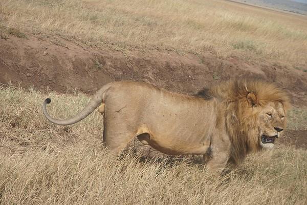 Natural Wonders of Tanzania & Kenya