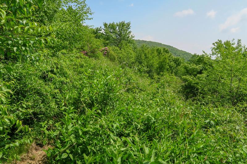 Graveyard Ridge Trail -- 5,560'