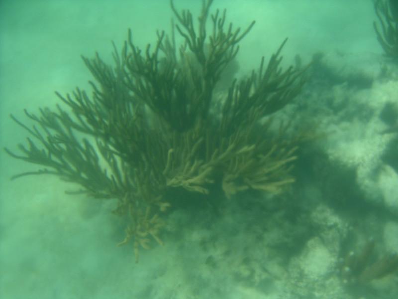 11 Coral.jpg