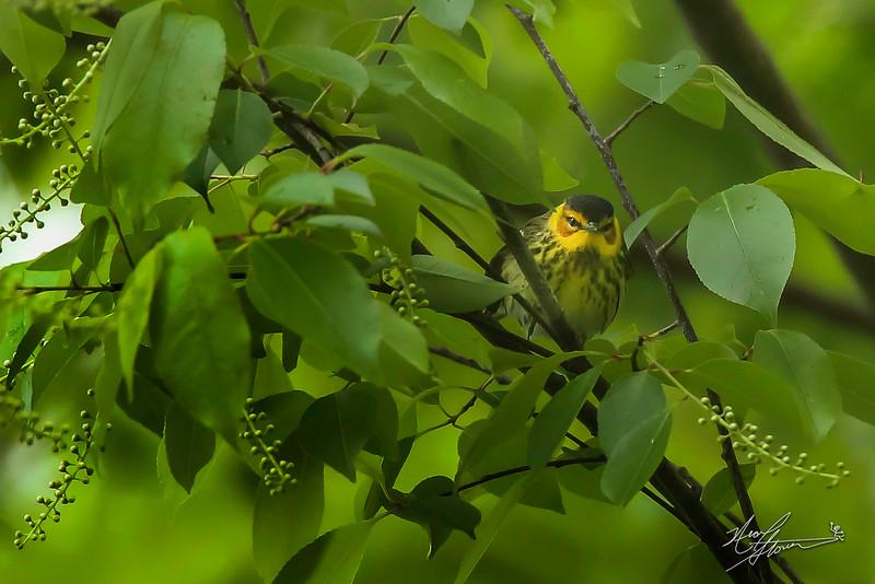 Birds 5-12-101 copy.jpg