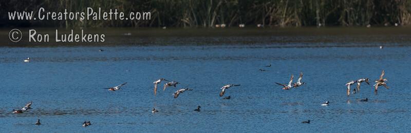 Oso Flaco Lake (Nipomo)