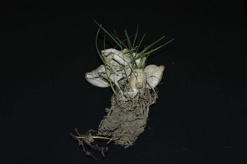 Mycology 053.jpg