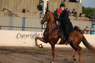 14. Five Gaited Novice