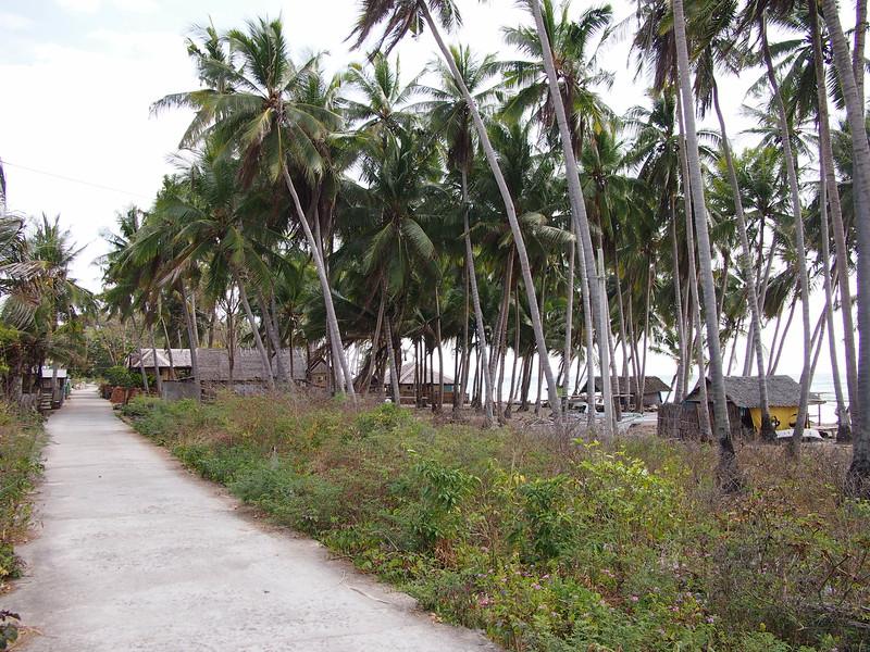 P9109161-coconut-road.JPG