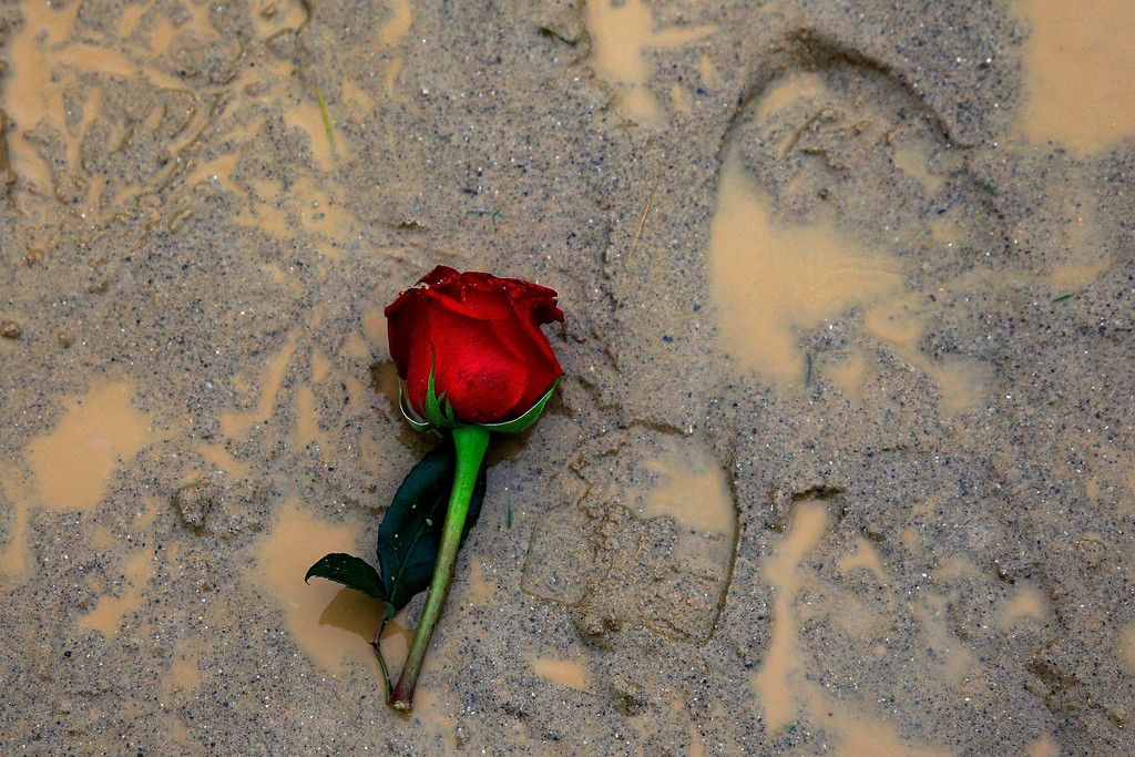 . LOUISVILLE, KY - MAY 04:  A rose sits in the mud during the 139th running of the Kentucky Derby at Churchill Downs on May 4, 2013 in Louisville, Kentucky.  (Photo by Rob Carr/Getty Images)