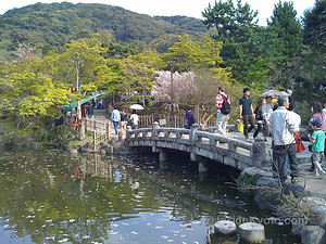 Maruyama-koen Park, Kyoto